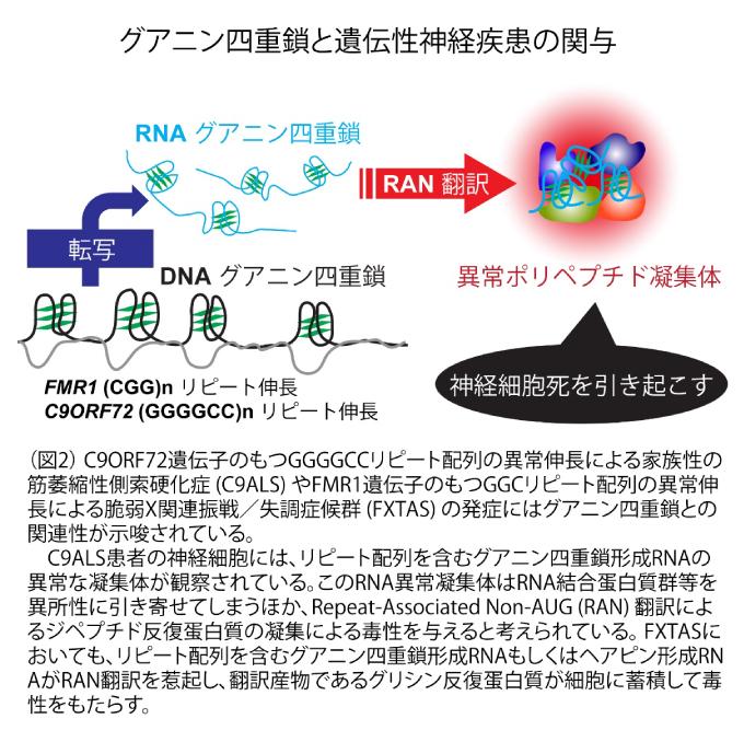ゲノム神経学分野 - 熊本大学発...